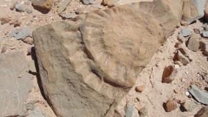 Fosil Kadal Bersayap-1631508936