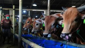 Ilustrasi peternakan hewan-1633354680