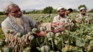 Para petani di Afghanistan mengandalkan opium untuk bisa bertahan dalam situasi krisis ekonomi saat ini-1633760494