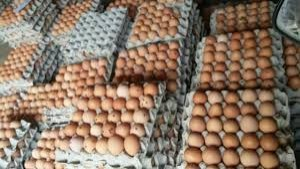 Telur ayam-1633971061